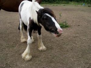 Humble Horse